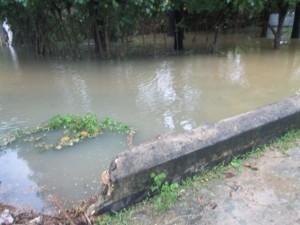 vali metkil vivasaya kaanikal paathukaakapattathu (1)