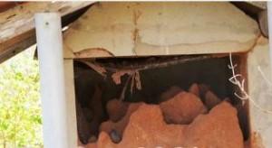 aalayankalai kaanavillai (1)
