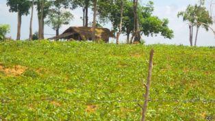 batticaloa_grass_land