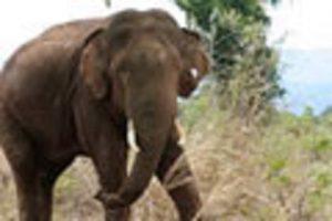 elephant attach