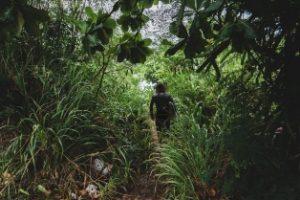 vavuniya Forest